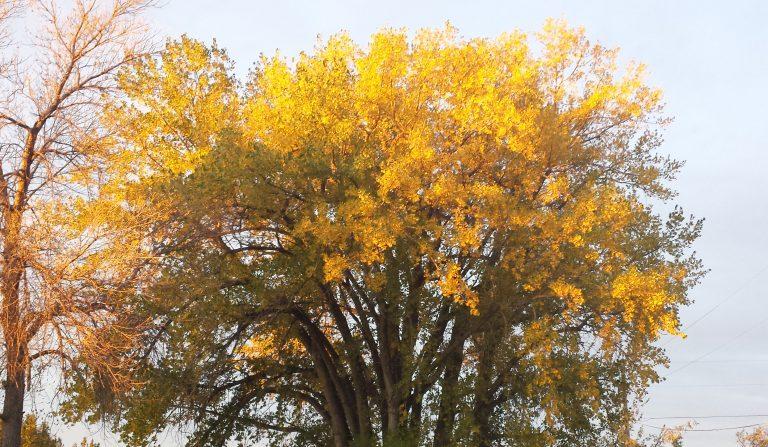 reflect on fall